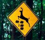 Funny Signs_Deer_19.jpg