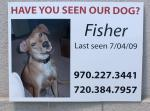 Fort Collins, CO Lost Pet Plastic Coroplast Yard Sign